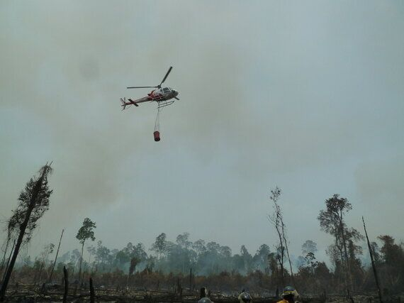 Tackling Forest Fires Is Vital for Tackling Climate