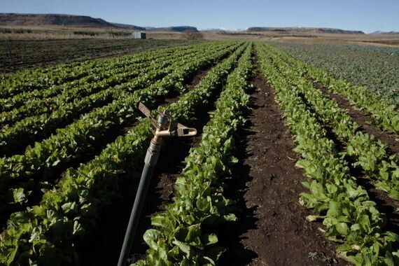 Why African Agriculture Should Be a Hot Topic for