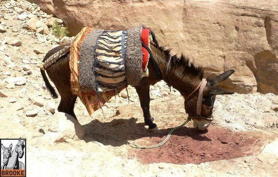 It's a Hard Life Being an Invisible Equine Working in Tourism - How Can You