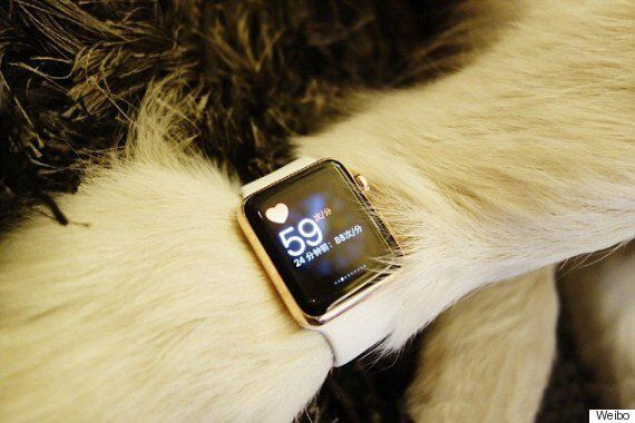 Chinese Billionaire's Dog Hounded On Weibo For Wearing TWO Gold Apple