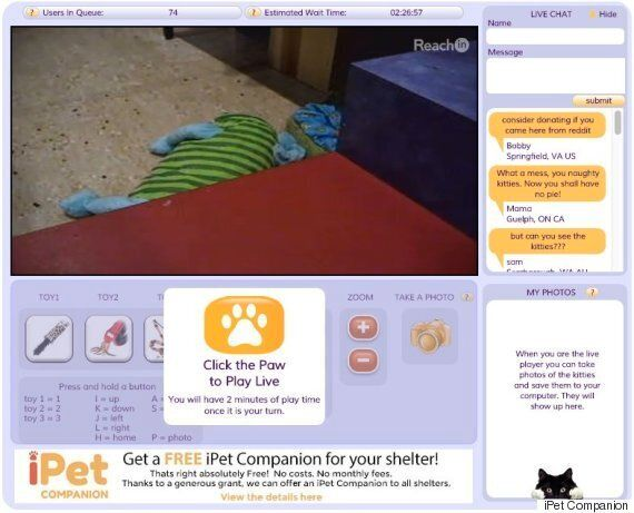 New Online Play-Tool iPet Companion Lets People Interact With Kittens Over The