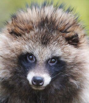 Lacking Infurmation: Are We Becoming a Nation of Accidental Fur