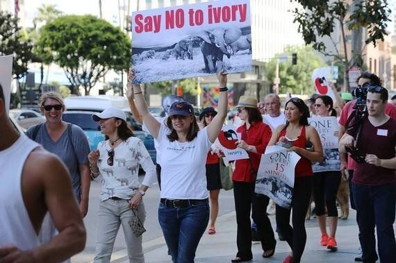 We Must Be a Voice for Elephants at the Political