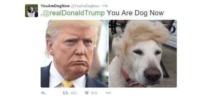 'You Are Dog Now' Twitter Account Will Match You With Your Canine
