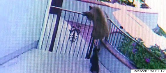 French Bulldog CCTV Footage Shows Pooch Scaring Away Two Bears From California