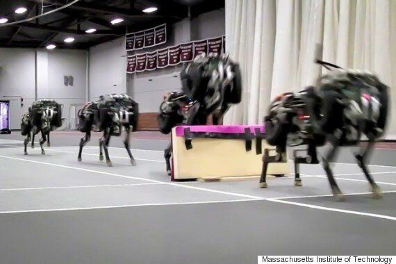 MIT's Robotic Cheetah Is Surprisingly Fast, Efficient And Almost Like The Real