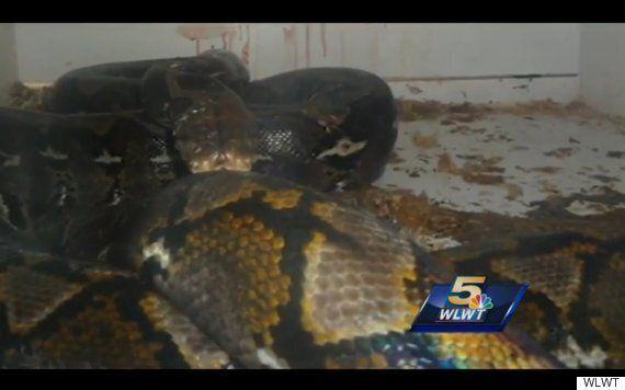 Newport, Kentucky Python Attack Sees Pet Shop Owner Injured, Customer