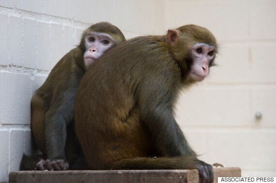 Primates In UK Laboratories Exposed To 'Cruel And Distressing Experiments', Says Cruelty Free