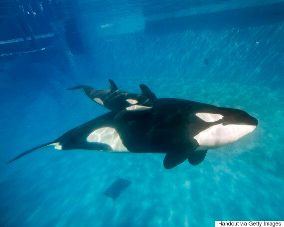 SeaWorld Banned From Captive Breeding As $100 Million Expansion Plan Is