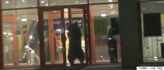 Russia Shopping Mall Bear Shot Dead In Children's Playground By