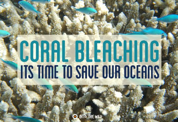Coral Bleaching: It's Time To Save Our