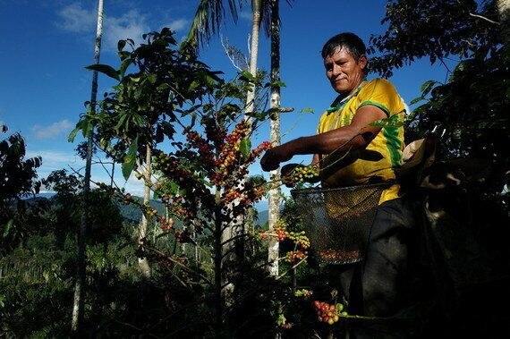 Climate Change: Coffee Farmers Feel the