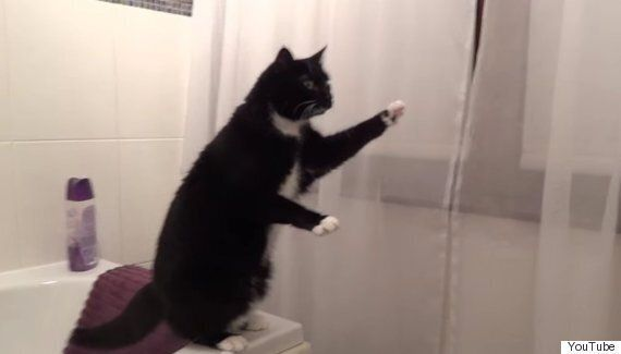 This YouTube Cat Earned Its Owner Enough Money To Pay Off His Tuition Fees - Just By Staring In The
