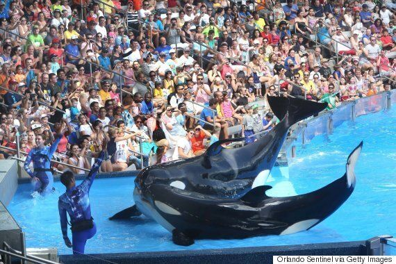 SeaWorld San Diego Will End Its Orca Shows After Bad Customer