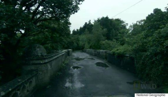 'Dog Suicide Bridge': 600 Hounds Leap From 'Haunted' Scottish