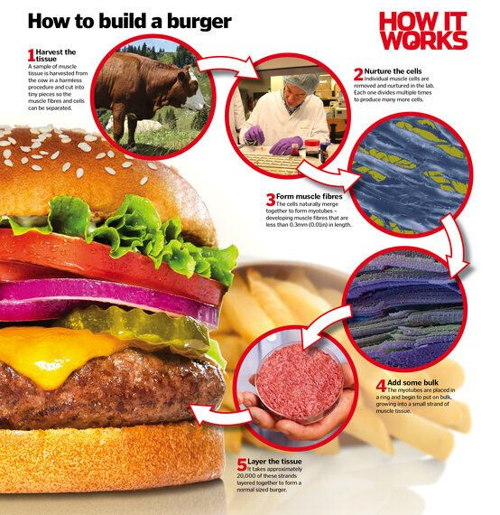 Why Lab-Grown Burgers, 3D-Printed Pizzas and Insect Crisps May Be the Future of