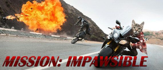 Tom Cruise Replaced With A Cat In 'Misson:Impossible'