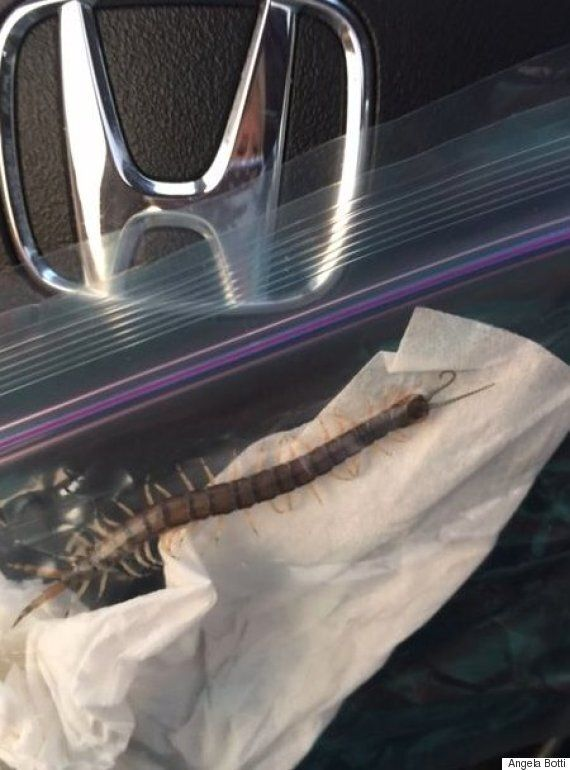 Teen Pulls Out Four Inch Centipede From His EAR After Suffering Horrible