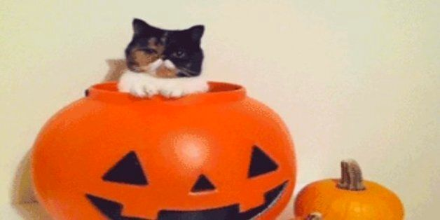 21 Amazing GIFs Of Dogs And Cats In Halloween