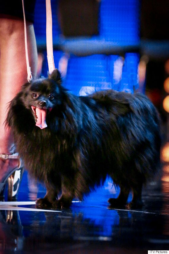 'Britain's Got Talent': Hypnotist Dog Fails To Make Simon Cowell Fall Under Its Spell