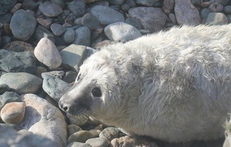 Diary of a Bardsey Seal