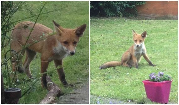 The Fox Hunting Ban - My Thoughts and How You Can