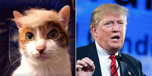'Trump Your Cat' Encourages People To Put Donald Trump Hairstyles On Their