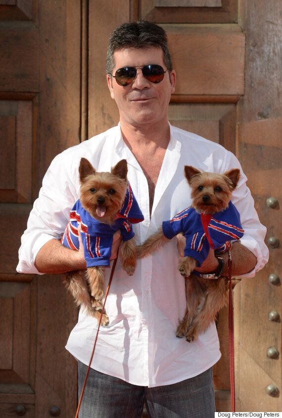 Simon Cowell To Protect Dogs From Seagull Attacks With Specially Made