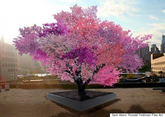 Tree Of 40 Fruit: Artist Sam Van Aken Creates 'Frankenstein' Hybrid
