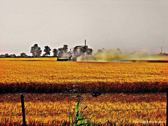 No to GMO: EU Countries to Enjoy Greater Powers to Ban