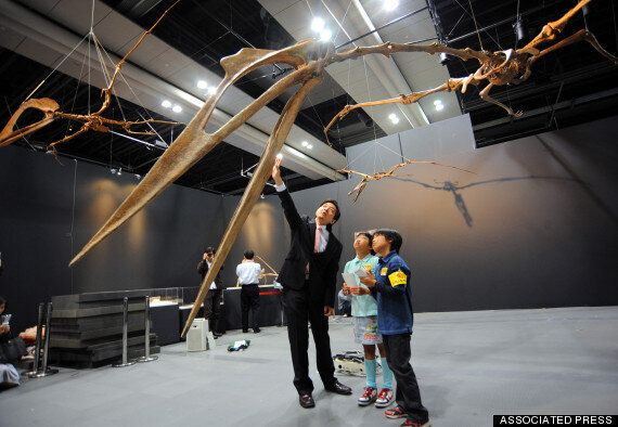Flying Pterosaurs Were As Big As It Gets, Study