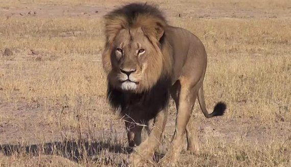 Cecil The Lion's Killer 'Revealed As American Dentist Walt Palmer' Who Bribed Guides