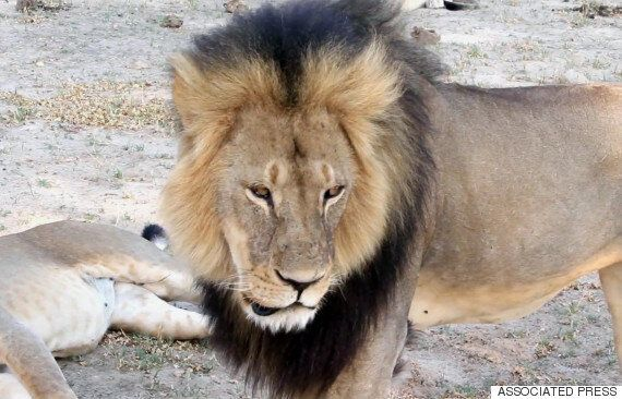 Cecil The Lion's Killer Walter Palmer Maintains He Did Nothing Wrong... Goes Into Hiding