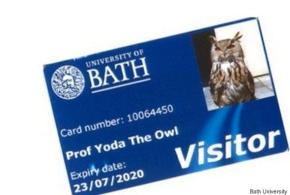 Yoda The Owl Gets His Own Bath University Library Card As A Thank You For Scaring Off