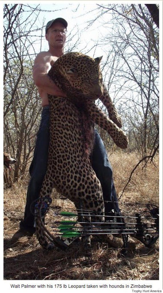 Cecil The Lion Scientist Admits Hunting Has A Part To Play In Conservation - But There's No Place For...