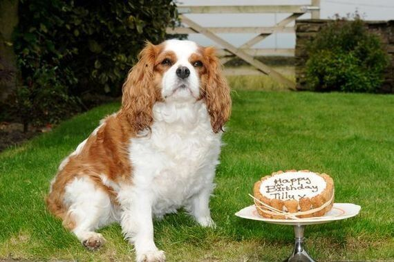 Awesome Let My Dog Eat Cake My Day At A Patisserie That Bakes Cakes And Personalised Birthday Cards Akebfashionlily Jamesorg