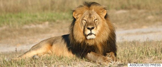Cecil The Lion's Killer, Walter Palmer, Also Wanted To Kill An Elephant, According To