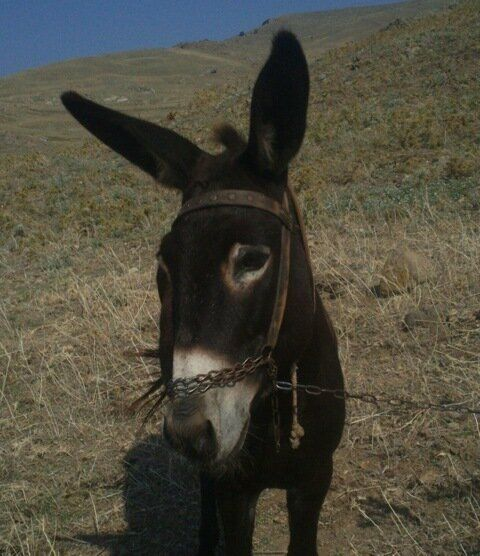 How Donkeys Helped Me Understand the Greek Crisis and the