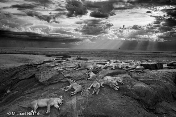 Wildlife Photographer of the Year 2014 at Natural History