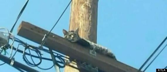 Worker Rescues Cat Then Throws It To The