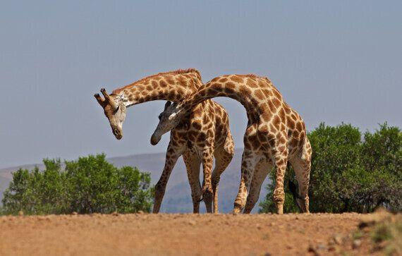 Fascinating Ways Animals Greet Each