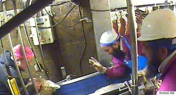 Bowood Yorkshire Lamb Halal Slaughterhouse Where Staff Abused Animals Goes Into