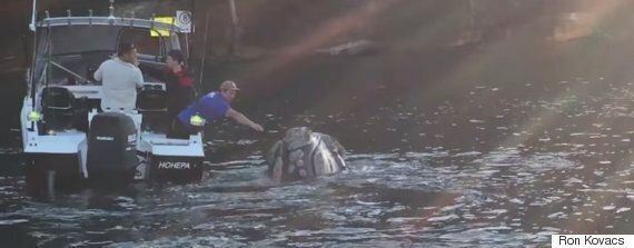 Whale Approaches Fisherman To Remove Plastic Bag From Its
