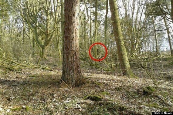 British Bigfoot Seen And Heard In