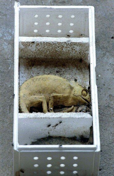 The Hidden Cost of Wildlife Crime: Four Out of Five Animals Die in