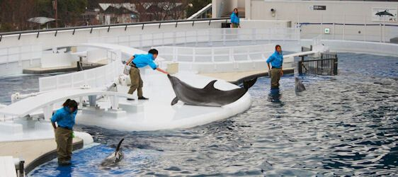 Saving Japan's Dolphins - Is Boycotting Travel the