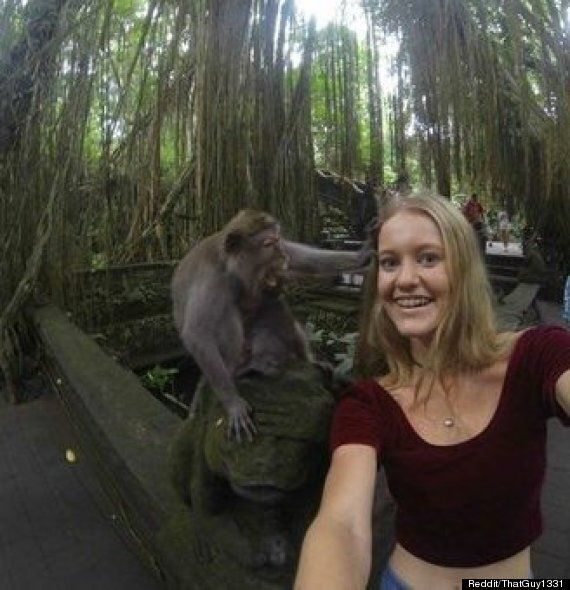 Tourist's Selfie With Monkey Goes Very Wrong