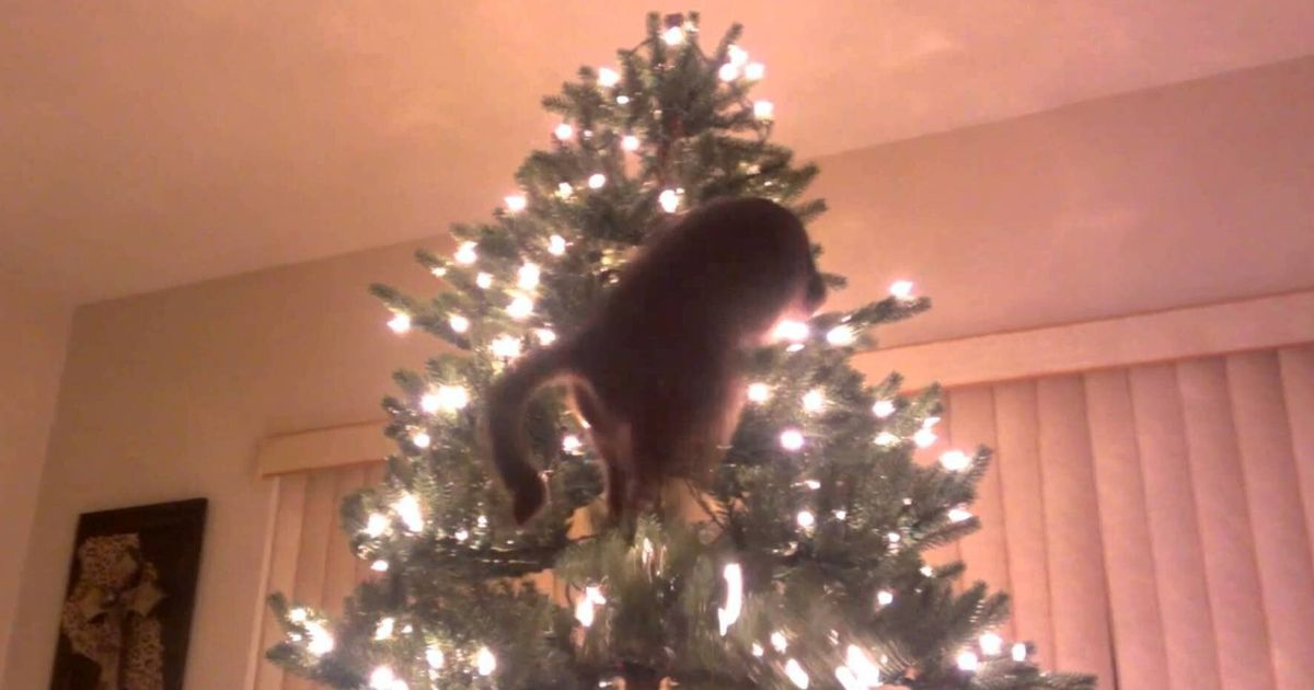 Cats Vs Christmas Trees.Cats Vs Christmas Trees A Compilation Huffpost Uk