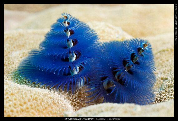 Fashion, Photography, Science, and Coral Reefs... Top 10 London Exhibitions for