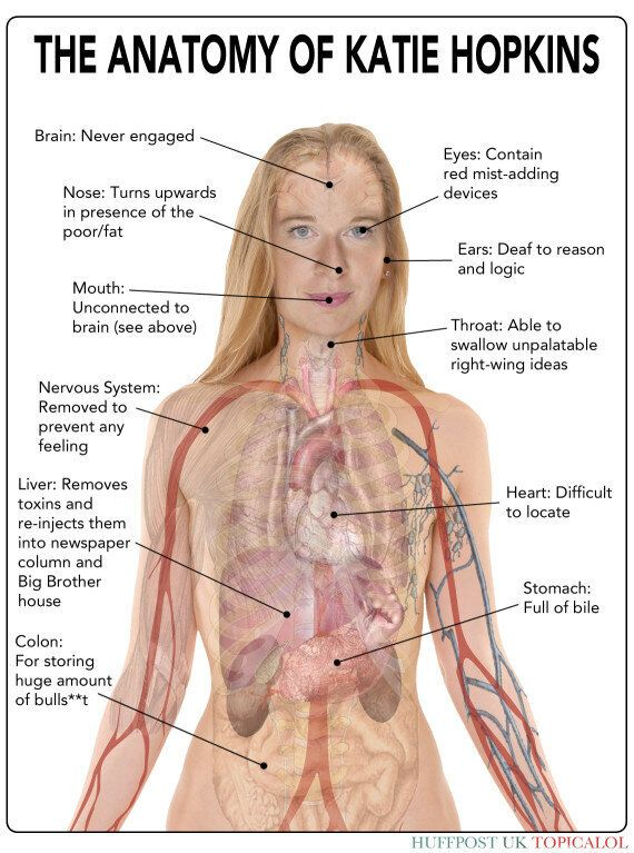 The Anatomy Of Katie